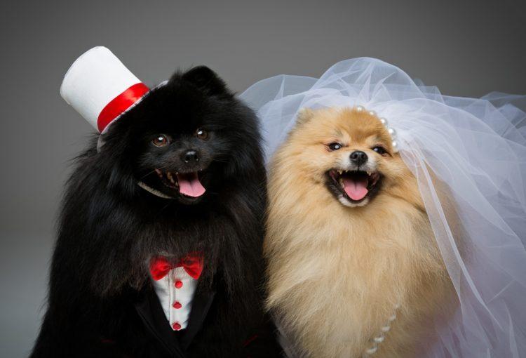 Francesco Sacco a Pescara offre l'esclusivo servizio Wedding Dog che ti permetterà di avere il tuo cane al tuo fianco nel giorno del tuo matrimonio!
